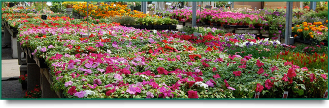 bg_garden